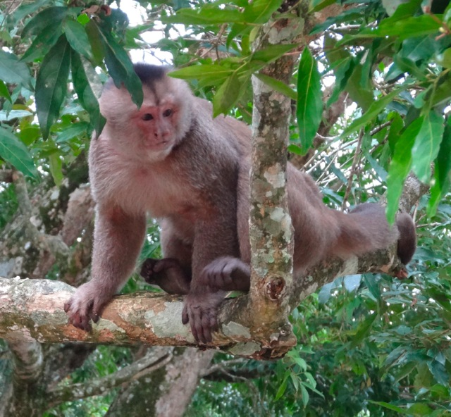 Amazon_Trip_Monkey