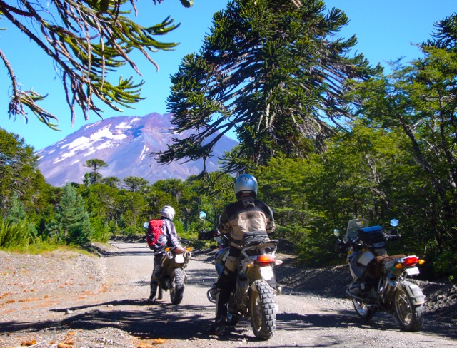 Araucania_Trees_Chile_Patagonia.jpg