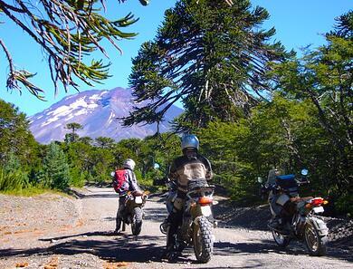 Araucania_Trees_Chile_Patagonia