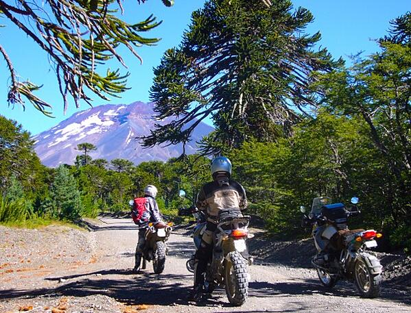 Araucania Trees and Motorcycles in Patagonia