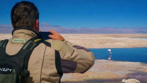 Andean_Flamingo_Atacama.jpg