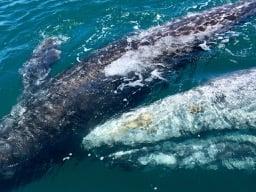 Grey Whale Baja Motorcycle Trip