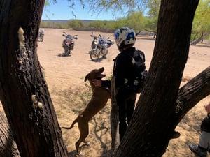 Rider Dog Africa Twin Baja