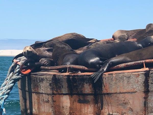 Sea Lions Baja Whale Watching