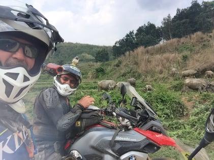 Water Buffalo Laos Motorcycle Trip