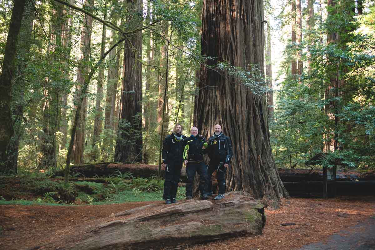 The crew taking a picture in front of a huge redwood tree.