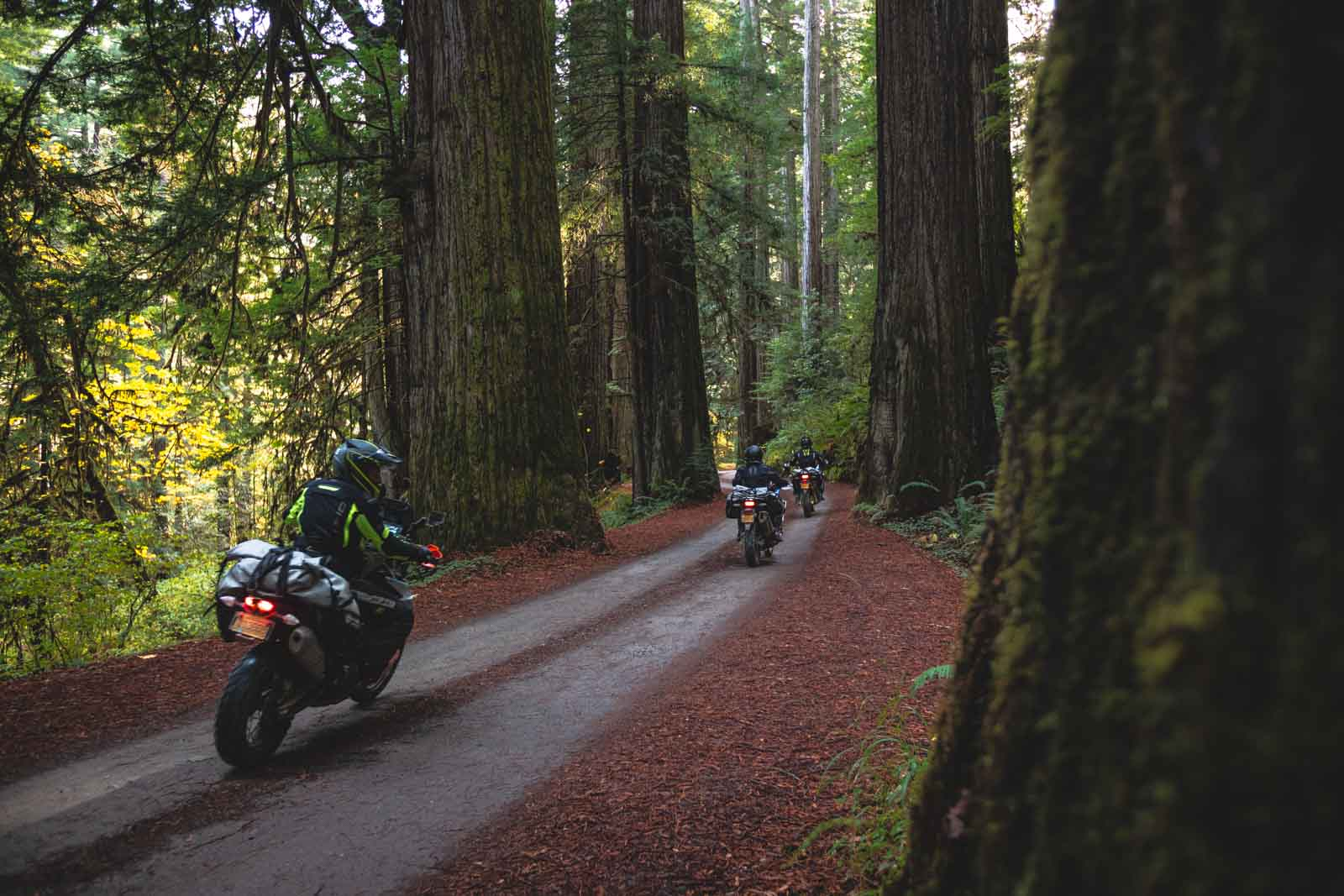 motorcycling-through-the-redwoods-on-the-pacific-coast-highway-adventure-motorcycle-tour-1