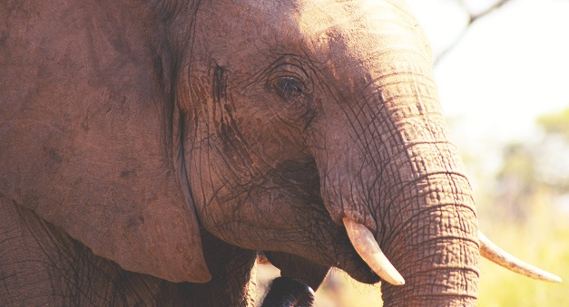 Southern_Africa_Experience_Tour_Slider_06.jpg