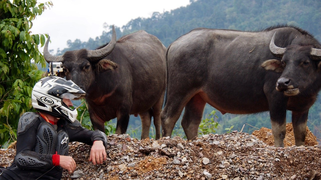 Thailand Water Buffalo and Rider