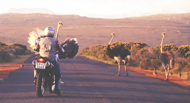 Tours by Motorcycle in Cape Town