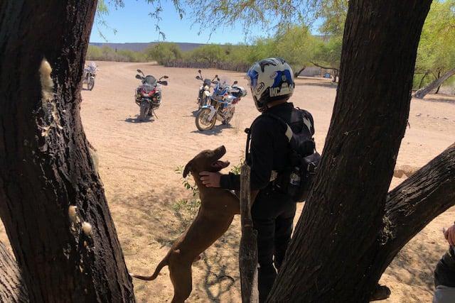 rider-and-dog-baja-adventure-motorcycle-tour